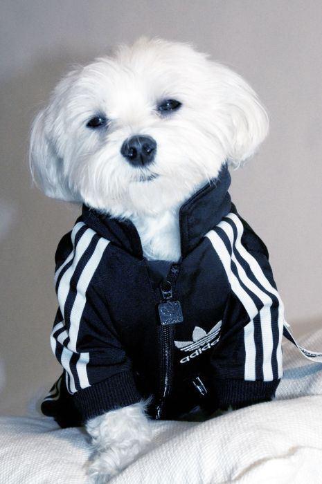 chien-sportif-1
